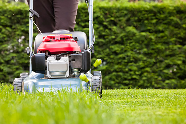 Lawn Maintenance and Landscaping Solutions